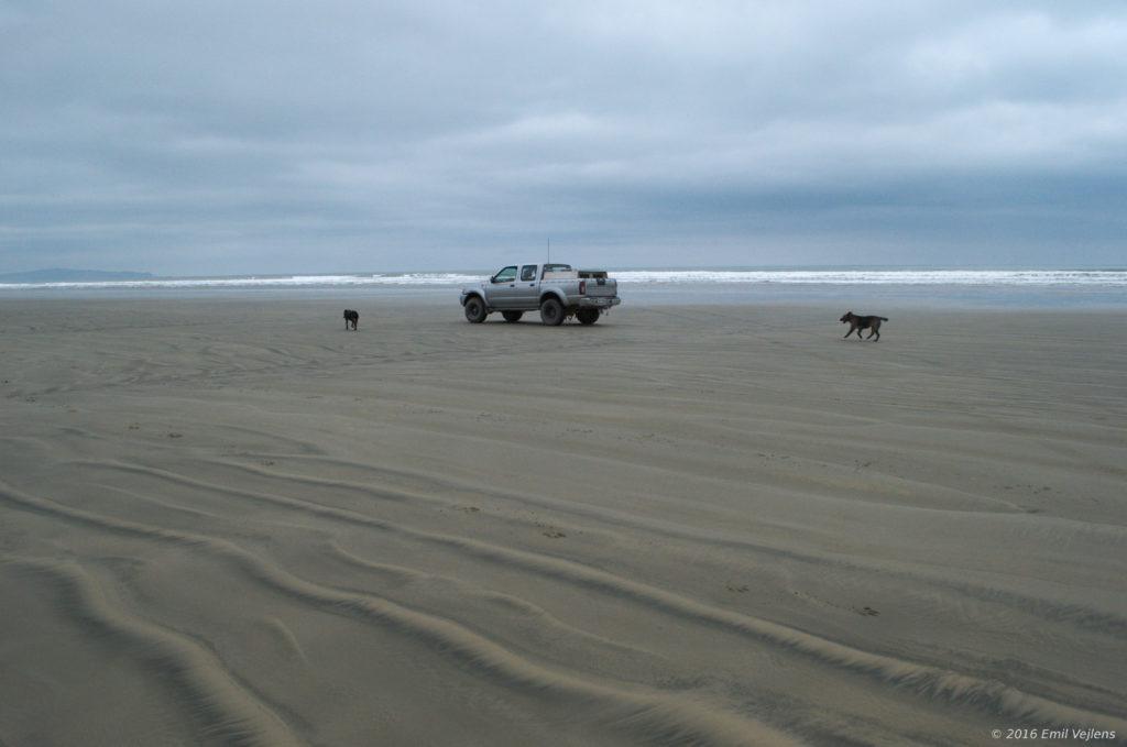 oreti_beach_dogs
